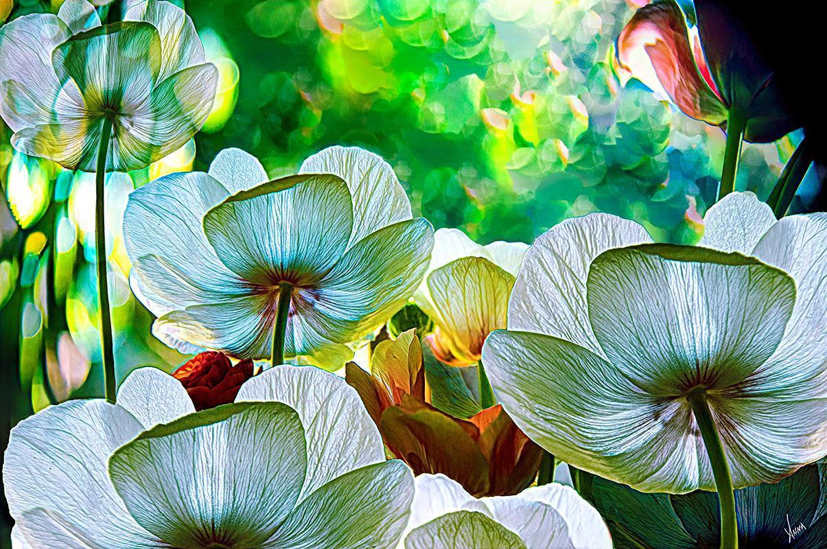 "Anna Barber (Ripon) Spring Flowers, 2020 Digital photo-art printed on polar luster metallic paper 20"" x 26"" $300"
