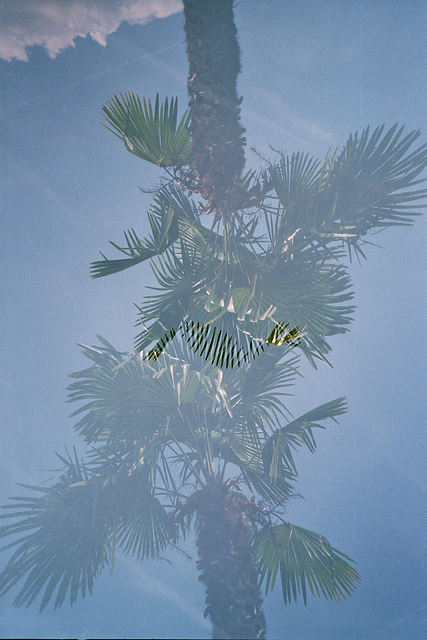 palme2doublePS.png