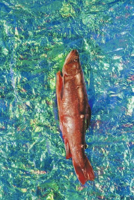 krinakingsman.fish.png