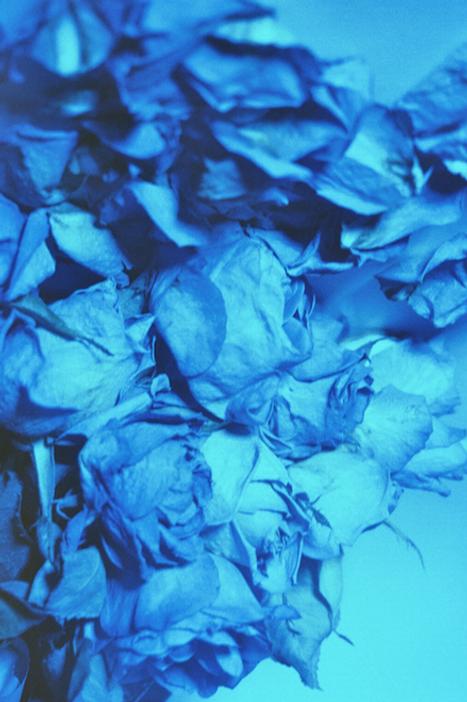 krinakingsman.onceupon.blue.png
