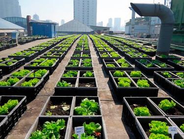 Horta Urbana – Uma Solução Ecológica para Condomínios