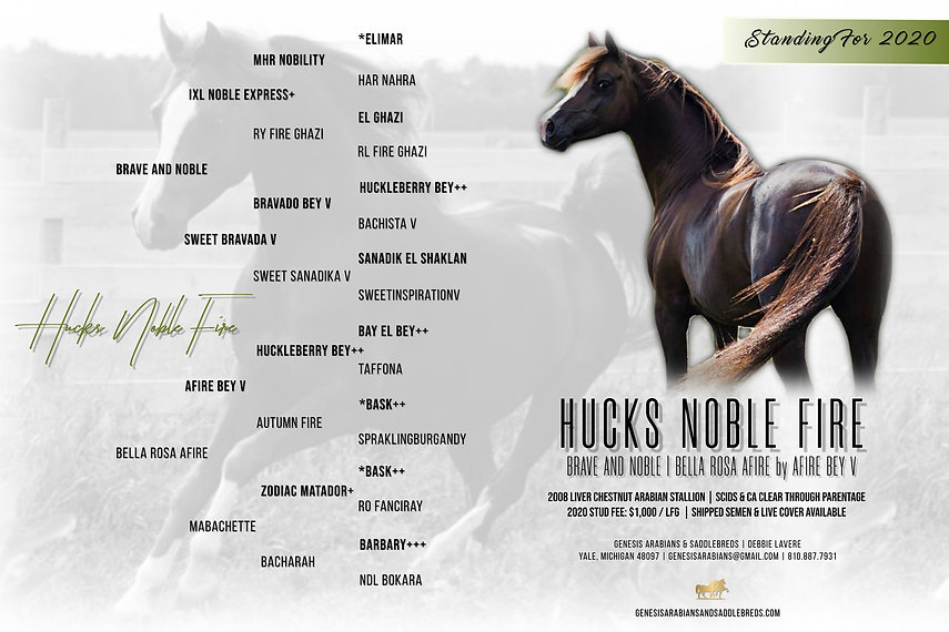 Hucks Noble Fire Stallion Ad 20.jpg