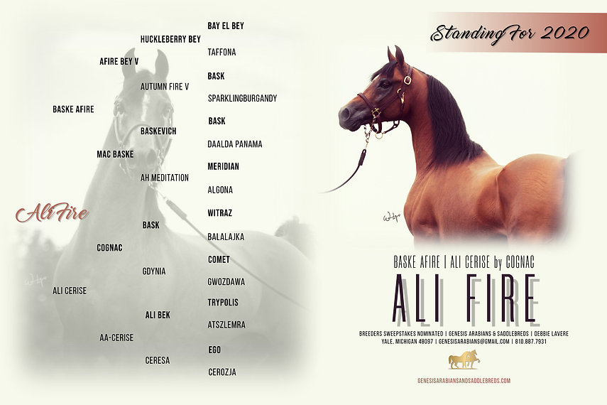Copy of Ali Fire Stallion Design.jpg