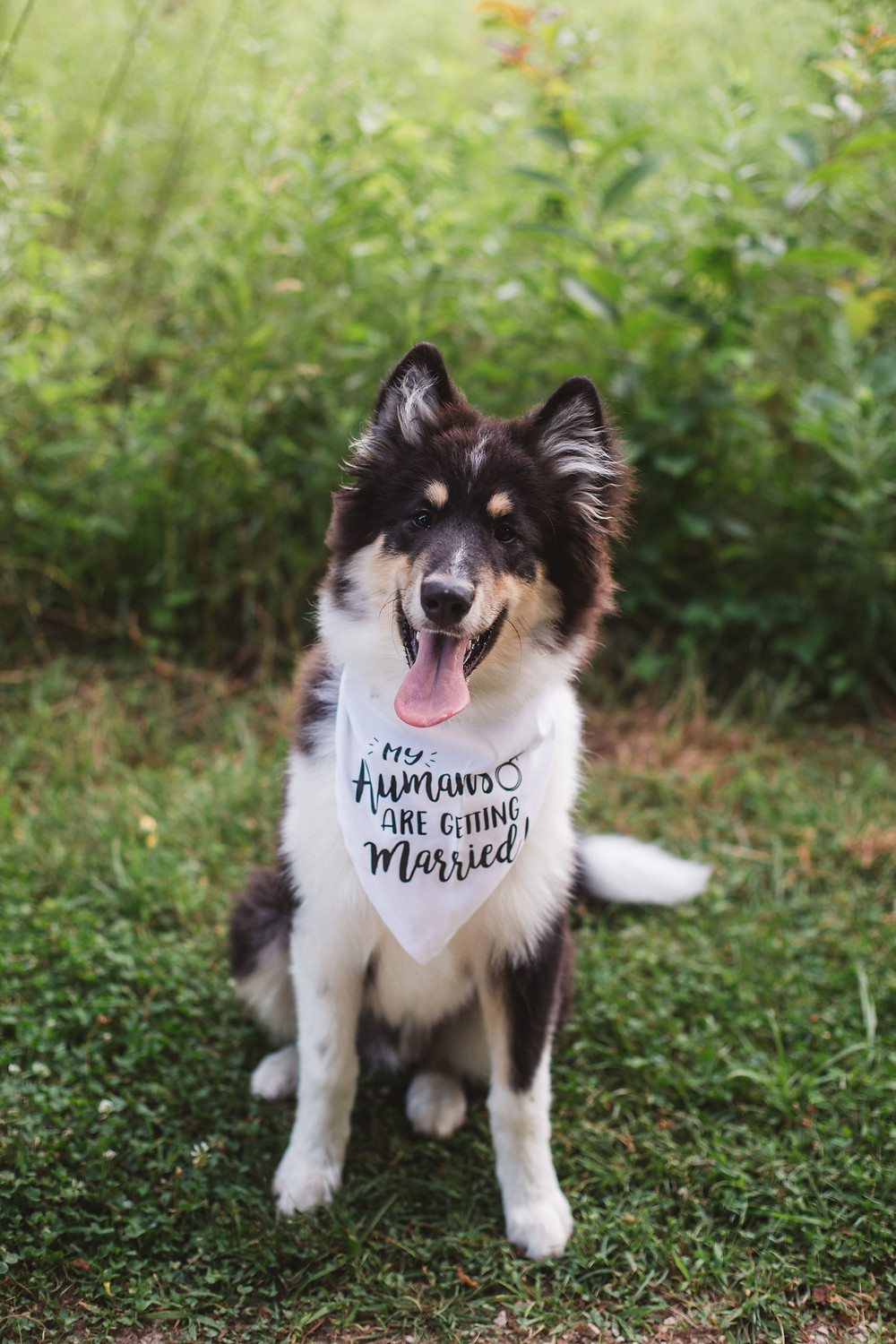 Dog wearing My Humans are Getting Married Bandana