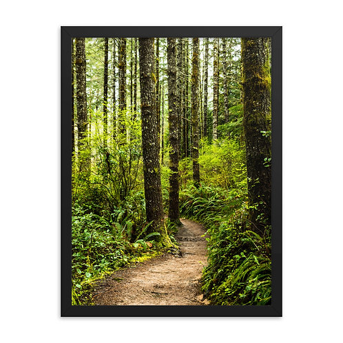 """Forest Trail"" by Melissa Toledo, 18""x24"" - framed photo poster"