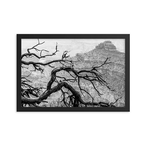 """Canyon Branches"" by Melissa Toledo, 12""×18"" - framed photo poster"