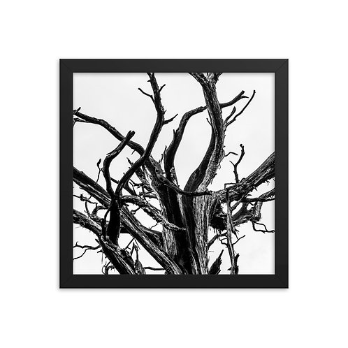 """Old Branches"" by Melissa Toledo, 12""×12"" - framed photo poster"