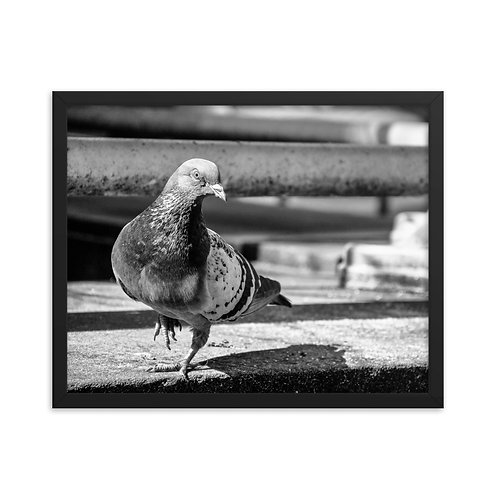 """City Pigeon"", 16""x20"" - framed photo poster"