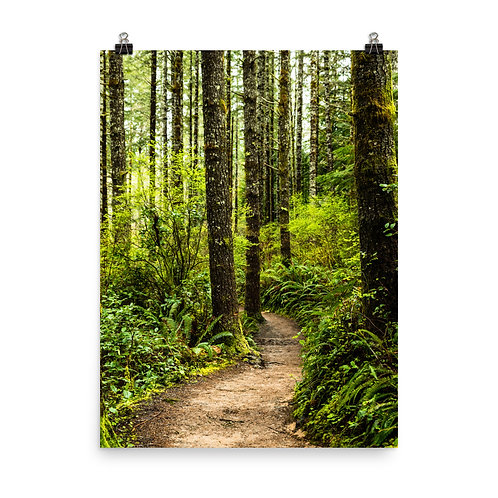 """""""Forest Trail"""" by Melissa Toledo, 18""""x24"""" - photo poster"""