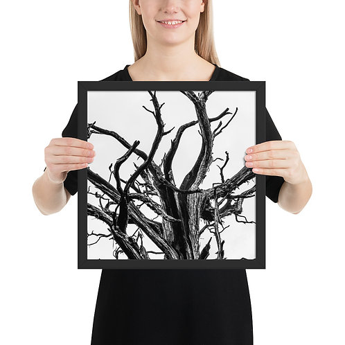 """""""Old Branches"""" by Melissa Toledo - framed giclée poster"""