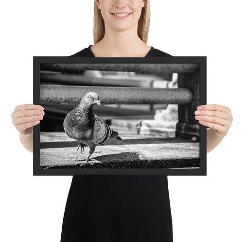 """City Pigeon"" by Melissa Toledo - framed giclée poster"