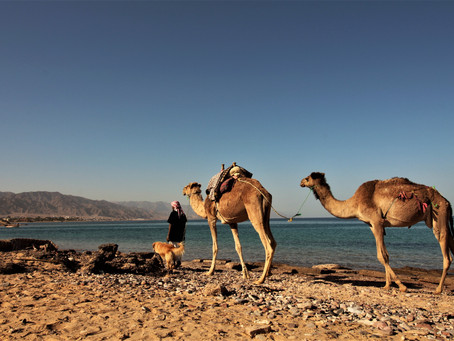Pause Sinaï