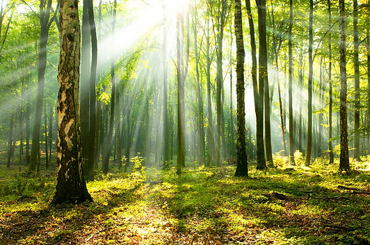 Beautiful morning in the forest.jpg