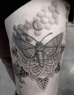 Dotwork Moth