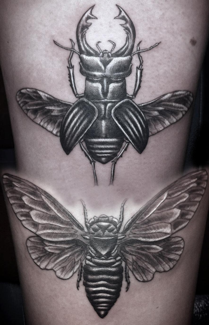 Scarab & Moth