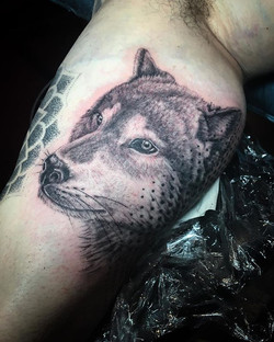Thanks Tom, _#wolftattoo #wolf #blackandgreytattoo #blacktattoo #neotatvivace #irezumiink #elsternwi