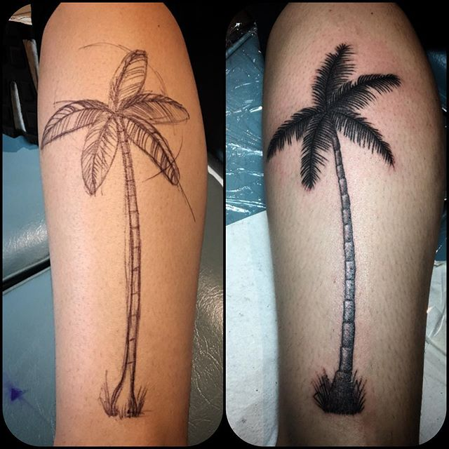 Palm tree for Sophie, _#palmtreetattoo #finelinetattoo #blackandgreytattoo #woody #elsternwicktattoo
