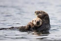 Wildlife - otters 1