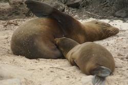 Wildlife - sea lions
