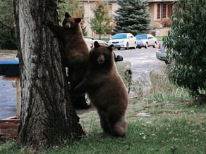 Wildlife Scavenger Hunt