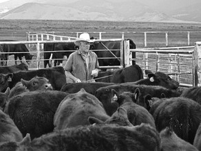 Photojournalist Publishes Book about Raton Veterinarian Truman Smith