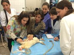 Anestesia em Aves