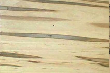 Ambrosia Maple.jpg