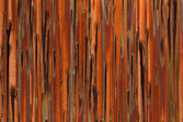 Bamboo_small.jpg