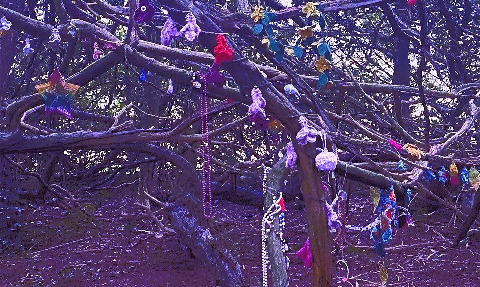 Clootie Tree Market Bosworth