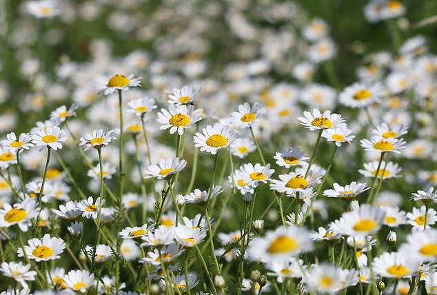 Fleursdelune_19.png