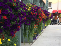 flowers and moto, Fairbanks