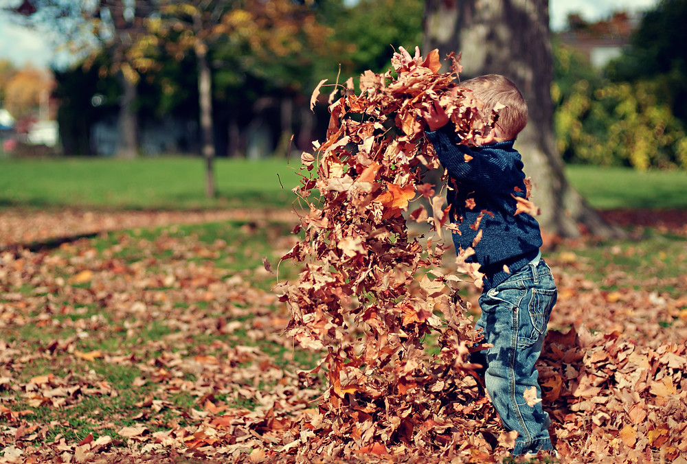 Young boy throwing leaves above his head in Autumn while playing outdoors