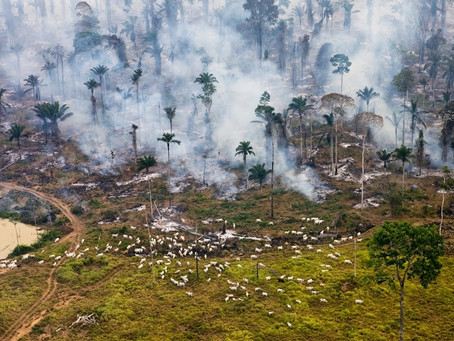 The Challenge to Be Optimistic in the Face of Environmental Disaster