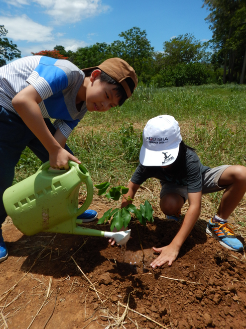 Tree Planting 1.png