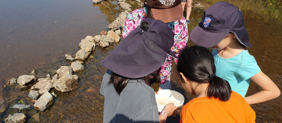 Part II: Rivers Are Perfect for Sustainability Education. Here's How.
