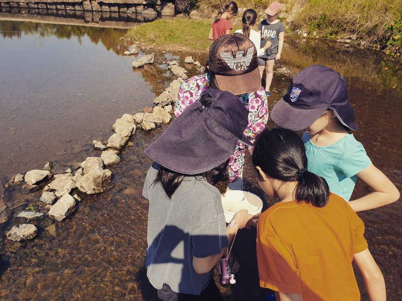 Primary students collect river invertebrates for identifying and learning about indicator species and water quality.