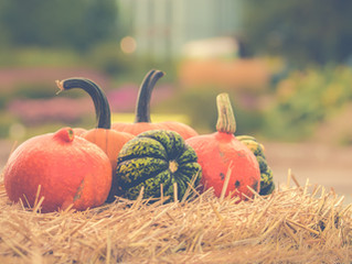 Best Kid Friendly Pumpkin Patches In The Twin Cities