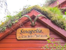 Synfaring i Smogelia