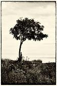 M.LKG.Tree.jpg