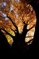 N.PAR.Heavanly Fall.jpg
