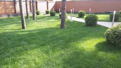 газон 6 соток