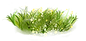 —Pngtree—grass green plant_4740497.png