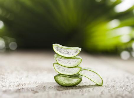 A incrível Aloe Vera | Inclua já em sua rotina de beleza!