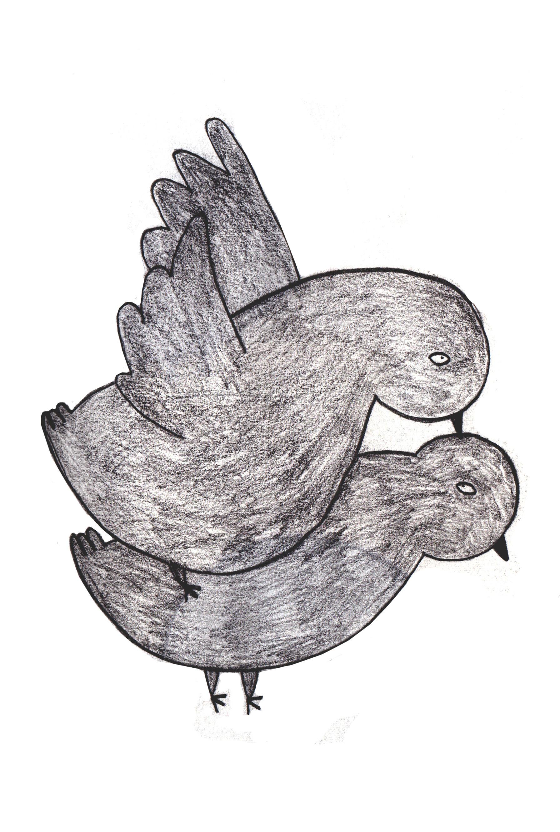 Pigeon Love03.jpg