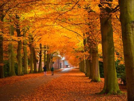 Autumn plans!