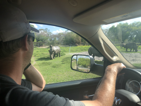 Lion Country Safari - Florida
