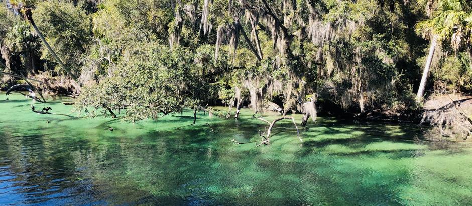 Blue Springs State Park - Florida
