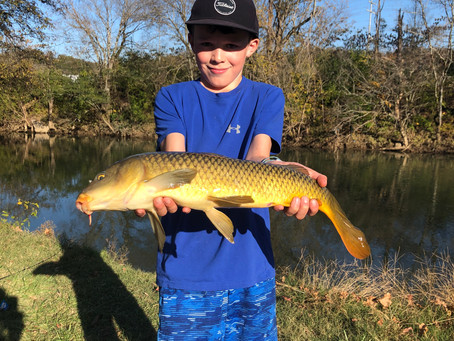 Carp Fishing in Tennessee