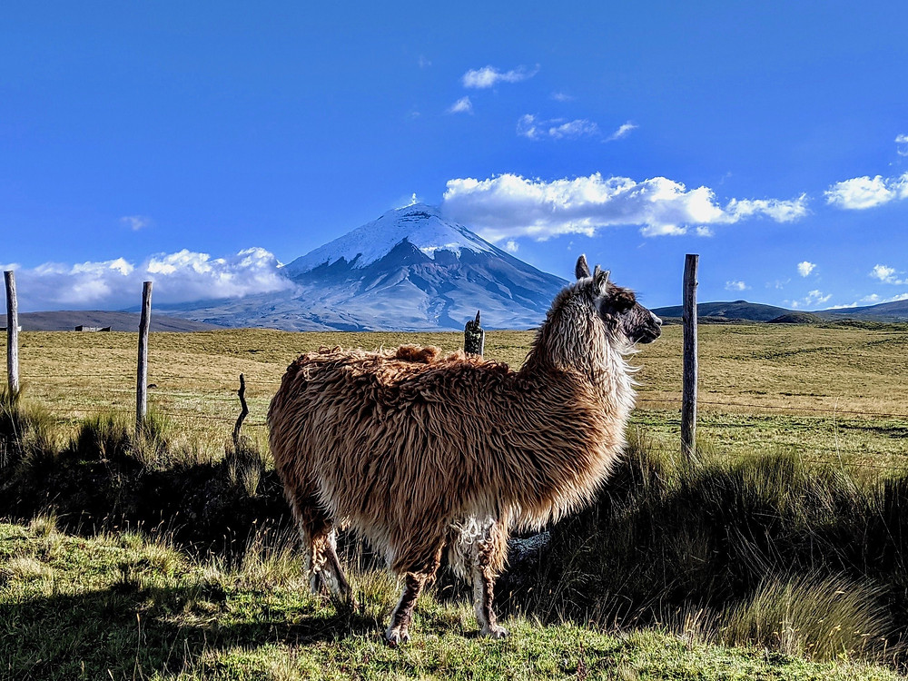 "View of Cotopaxi in ""Mountaineering in Ecuador"" by Michelle Riband, Beyond the Brambles"