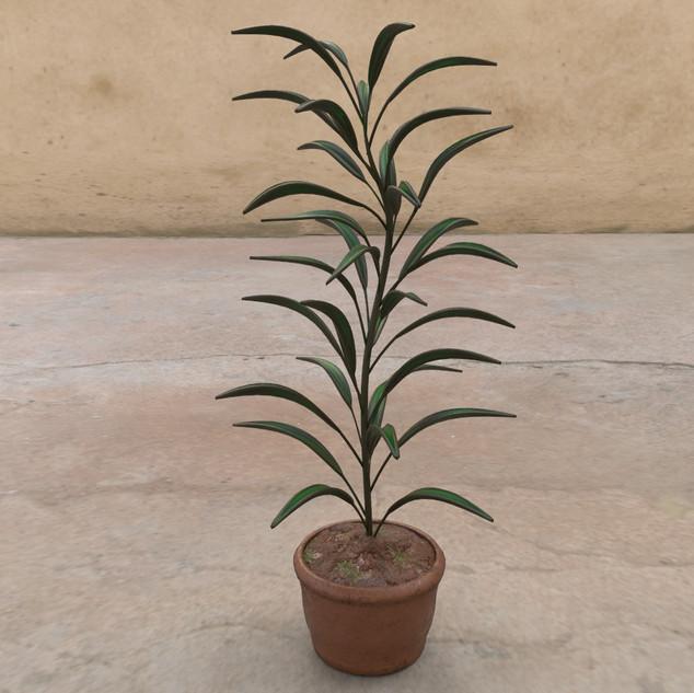 DF_Plant3.jpg